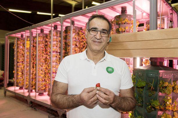 Vertikaaliviljelijä Ali Amirlatifin Hiedanrannan koetehtaassa ruokakasvit kypsyvät sisätiloissa ilman auringonvaloa. Amirlatifin keksintö voitti kansainvälisen Global Forum for Innovations in Agriculture (GFIA) -järjestön parhaan sisäviljelyjärjestelmän innovaatiopalkinnon Abu Dhabissa helmikuussa.