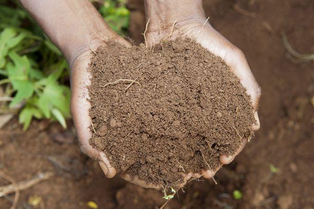 Kompostoitunut multa luovutetaan omaisille, jotka voivat esimerkiksi istuttaa siihen kukkia.