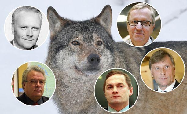Iltalehti kysyi viideltä eri maa- ja metsätalousministeriltä viimeisen reilun 30 vuoden ajalta, ovatko he siirrelleet susia idästä länteen. Yksikään ei ollut.