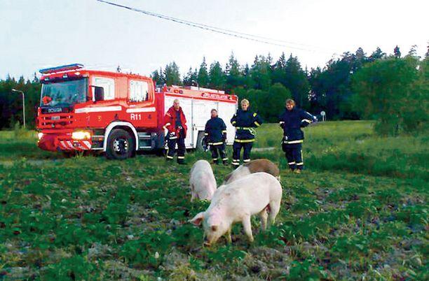 SIKOPAIMENET Poliisi ja pelastuslaitos pelastivat possukolmikon uhkaavalta tieliikennekuolemalta keskiviikkona puolen yön aikaan Raisiossa.
