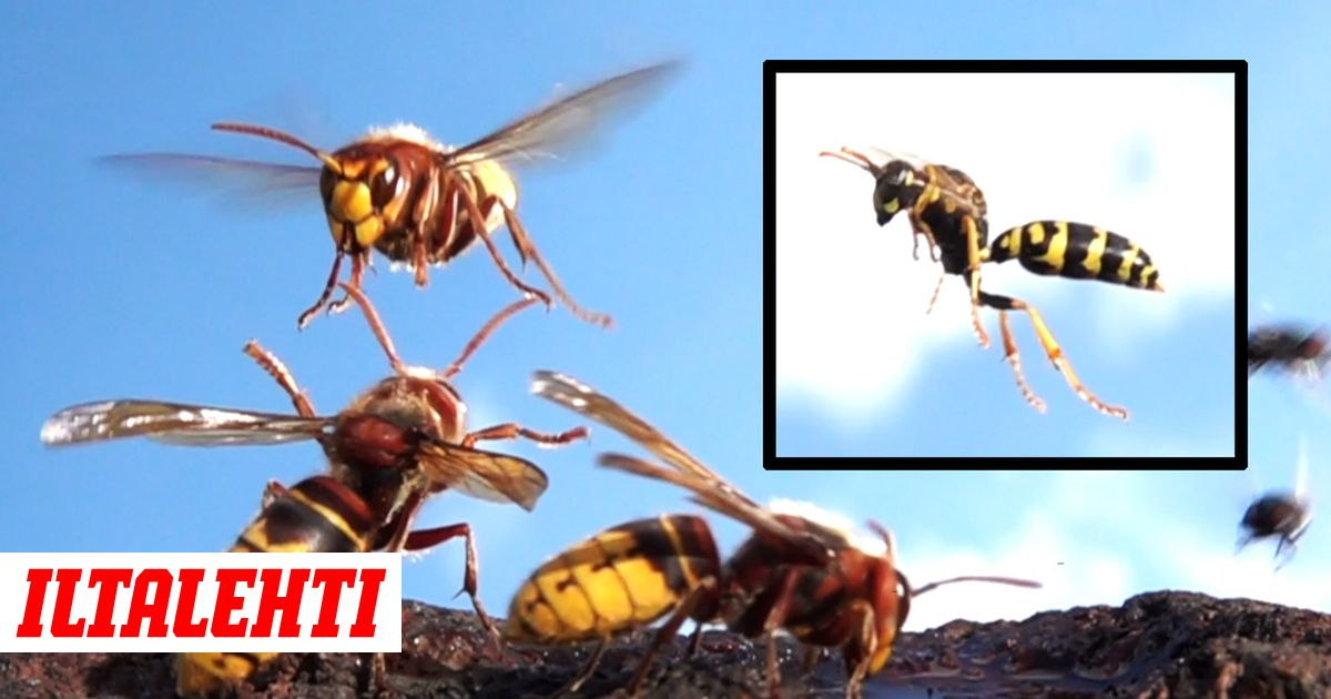 Herhiläiset