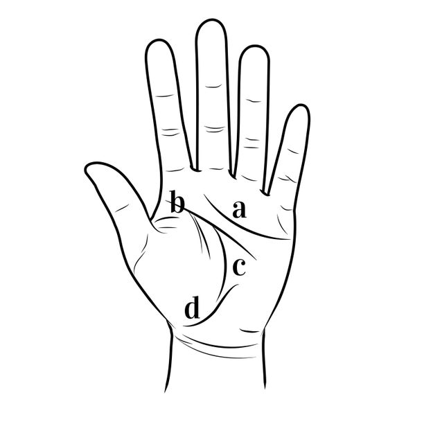 Tiedätkö, millä nimillä käsien viivoja kutsutaan? Kuva havainnollistaa: a) sydämenviiva, b) päänviiva, c) elämänviiva, d) uraviiva.