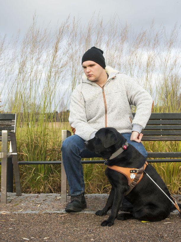 Olli Kytöviidan opaskoira Fasu on vasta nuori koira, mutta se tekee työtään kuin vanha tekijä.