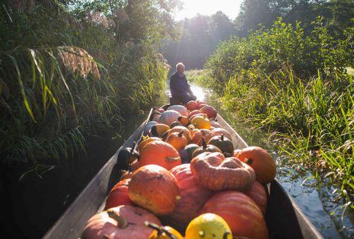 67-vuotiaan saksalaisen maanviljelijä Harald Wensken tiluksilla Brandenburgissa virtaa joki. Se onkin kätevä tapa kuljettaa kurpitsoja perinteisille sadonkorjuujuhlille.