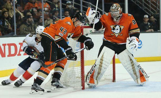 Vaara vaanii! Jaromir Jagr yllätti Ducks-puolustuksen täysin.