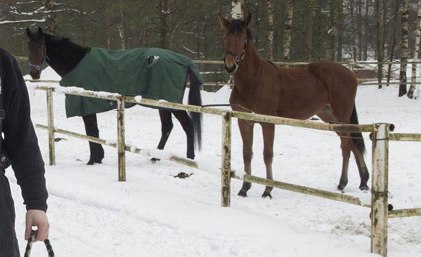 Nuolen aiheuttama vamma vaikeutti hevosen hengittämistä. Kuvituskuva ei liity tapahtumiin.