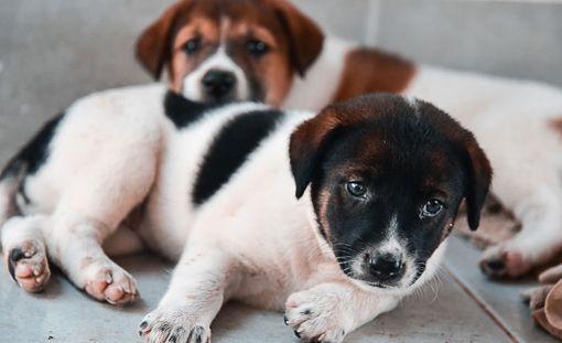 Monet koiranpennut ovat hyötyneet kampanjasta.
