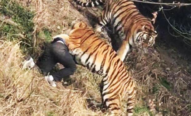 Kauhistuneet eläintarhan vierailijat näkivät hyökkäyksen, joka johti miehen kuolemaan.