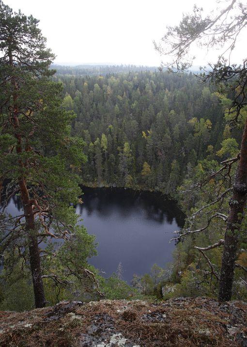 Keskiviikkona EU-parlamentin jäsenet päättävät Strasbourgissa kantansa Suomelle tärkeästä metsävarojen hyödyntämiskysymyksestä.