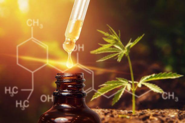 Kannabisöljy eli CBD-öljy on vasta tulossa Suomeen.