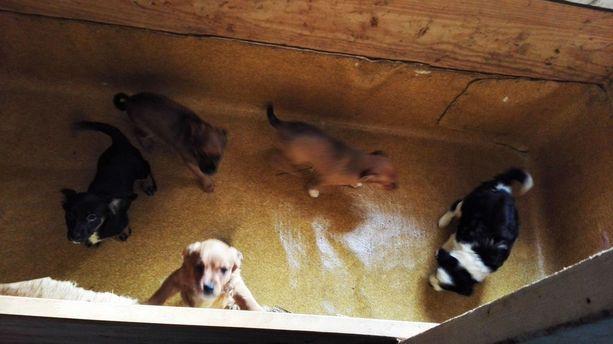 Poliisi tiedotti elokuussa 2017 tutkivansa 400 rikoksen vyyhtiä, jossa helsinkiläinen nainen on myynyt satoja laittomasti maahantuotuja koiria.