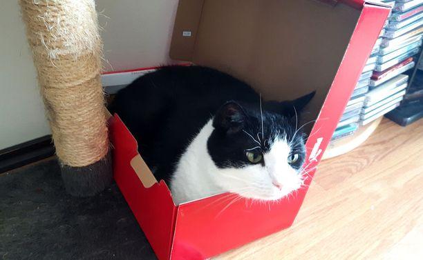 Laatikon ei tarvitse olla koolla pilattu. Mitä tiiviimpi sen parempi, tuntuu Bismarck ajattelevan.