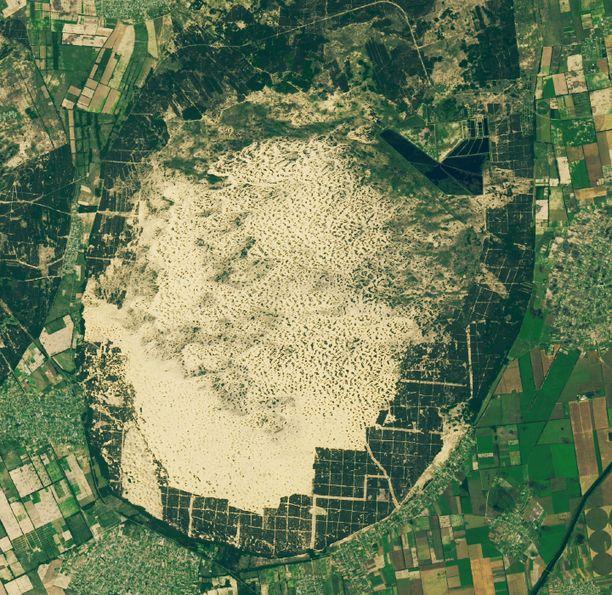 Hietikon ympärille on istutettu mäntymetsää hillitsemään aavikoitumista.