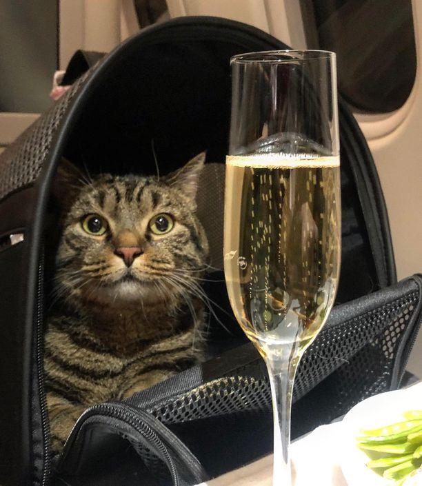 Viktor pääsi lopulta lentokoneeseen yhdessä isäntänsä kanssa.