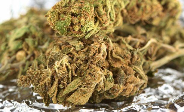 Tullin paljastaman marihuanalastin arvo on noin 1,4 miljoonaa euroa. Kuvituskuva.