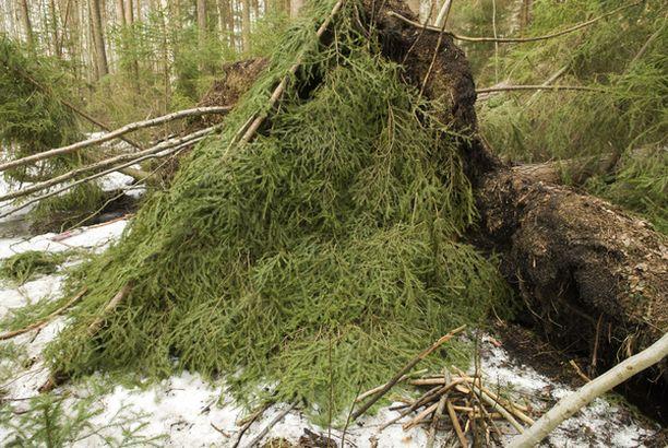 LEIKIN LOPPU Kaksi koulutyttöä löysi lumen alta paljastuneen miehen ruumiin keskiviikkona iltapäivällä Lauttakadun metsiköstä Tampereelta.