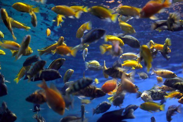 Saksalaismies varasti merivettä akvaarioihinsa. (Kuvituskuva)