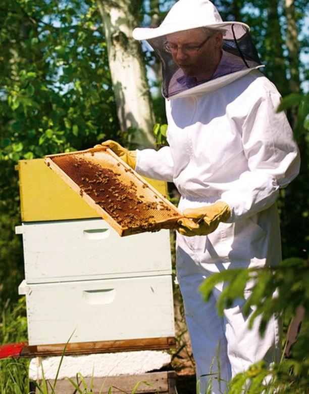 Hyötyeliöiden ja kasveille haitallisten hyönteisten tasapainon löytyminen vie luomupuutarhassa aikaa. Vie omenatarhaan linnunpönttöjä, niin haitalliset hyönteiset pysyvät kurissa. Älä hätkähdä parista ötökästä!