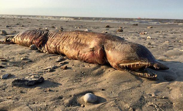 """Mikä se on! Preeti Desai löysi """"merihirviön"""" rannalta Texasissa."""