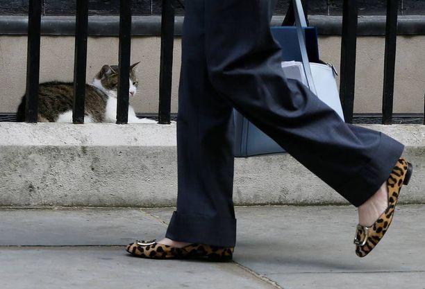 Leopardikuvioiset kengät on Mayn oma juttu. Nämä olivat jalassa tänään.