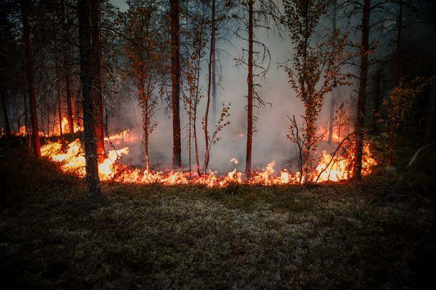 Näin metsää paloi Muhoksella maanantai-iltana.