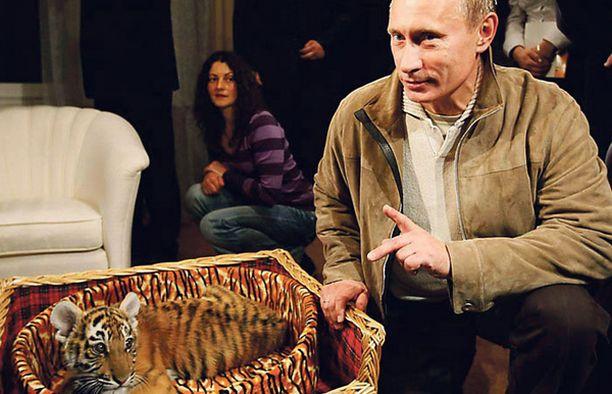 """""""Kyllä kelpaa johtaa suurvaltaa, kun saa näin kivoja lahjoja"""", saattoi tuumata Venäjän pääministeri Vladimir Putin. 7.10. 56 vuotta täyttänyt Putin sai lahjaksi muun muassa tiikerinpennun."""