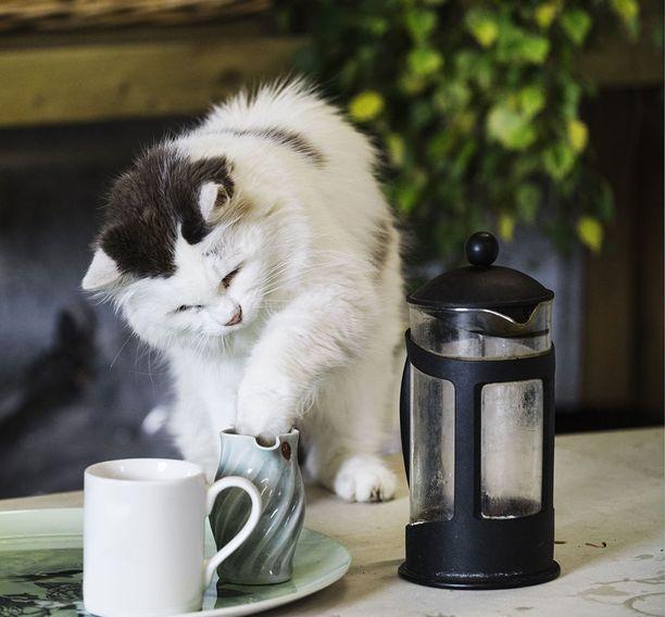 Onko kissallasi tarpeeksi virikkeitä ja leluja? Tylsistyminen voi ajaa kissan käyttämään leikkiin esineitä, jotka eivät ole siihen tarkoitettuja.