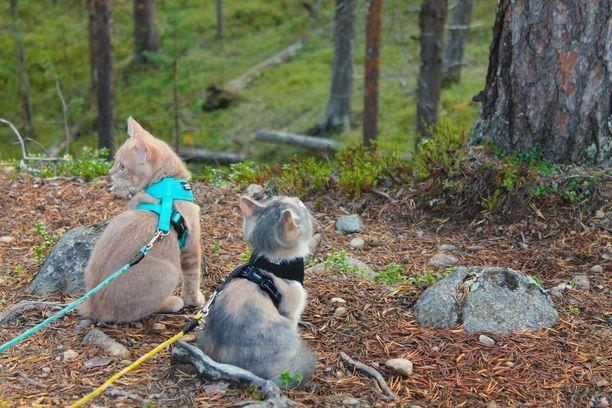 Aivan ensimmäisen vaellusretkensä Venni ja Oiva tekivät Lemmenjoen kansallispuistossa.