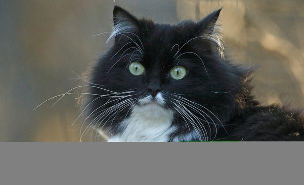Kuvan kissa ei liity tapaukseen.