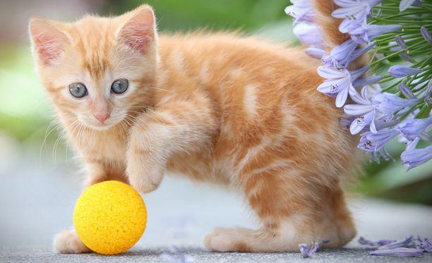 Sokeudestaan huolimatta Oskar-kissa on kuin mikä tahansa muukin pentu. (Kuvituskuva)