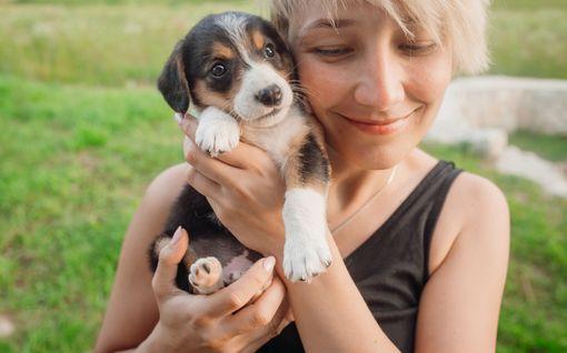 Oletko hankkimassa koiranpentua? Muista, että taustatyö ehkäisee ongelmia