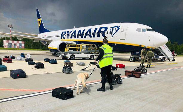Pommikoirat tarkastivat koneen matkatavarat Minskissä, kuten tässä lentokentän toimittamassa kuvassa näkyy. Yllättäen mitään ei löytynyt.