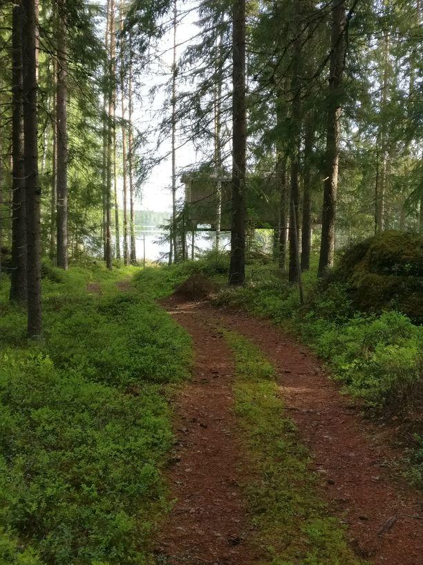 Puiden keskeltä pilkottava puumaja onkin kodikkaasti sisustettu hotellihuone.