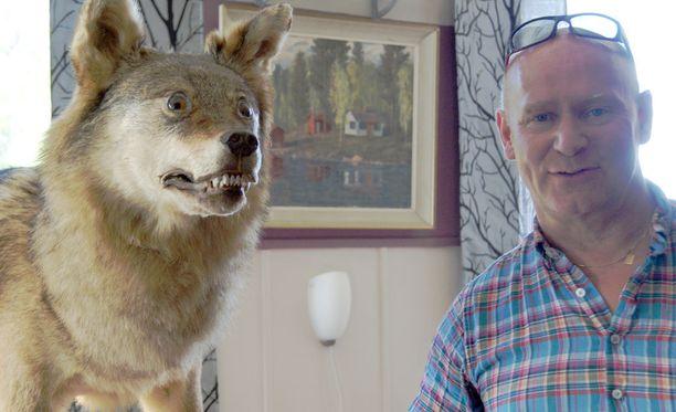 Täytetty susi on Seppo Kairalan yksi erikoisuuksista.