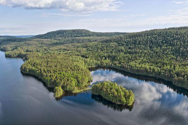 Koronarajoitusten poistuessa kesäkuinen Suomi tarjoaa matkailijalle jo paljon tekemistä. Kuva Kolin kansallispuistosta.