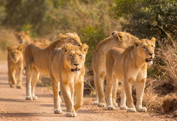 Etelä-Afrikassa elää runsaasti erilaisia villieläimiä.