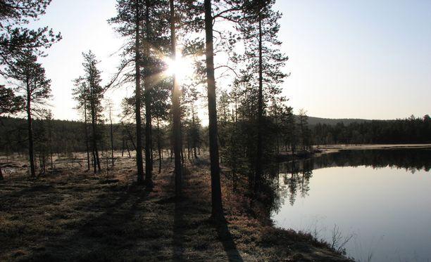 Nainen katosi Urho Kekkosen kansallispuiston alueella.