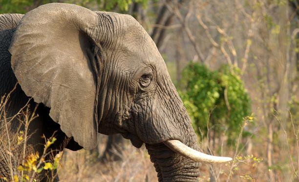 Vuonna 1929 perustettu Hwangen kansallispuisto on Zimbabwen suurin. Se on tunnettu erityisesti norsuistaan.