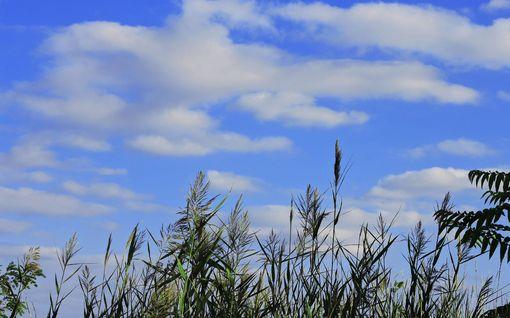 Syyskuusta ennustetaan tavanomaista lämpimämpää – ensi viikolla jopa yli 20 astetta rikki