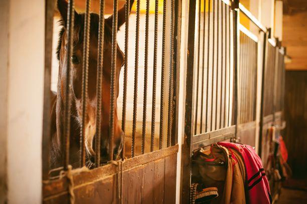 Kuvan hevonen ei liity tapaukseen.