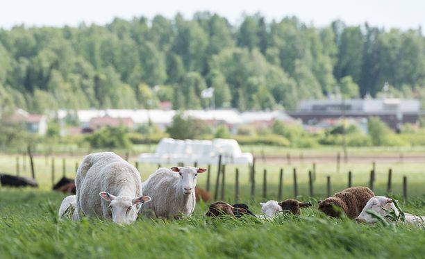 Tutkija ylistää etenkin Suomen luontoa, jota ei kuitenkaan hänen mielestään markkinoida maailmalle tarpeeksi.