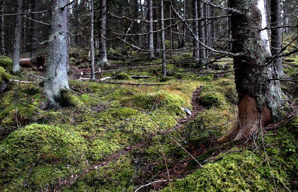 Pahoinpidelty mies harhaili poliisin mukaan metsässä yli tunnin ennen kuin löysi apua.