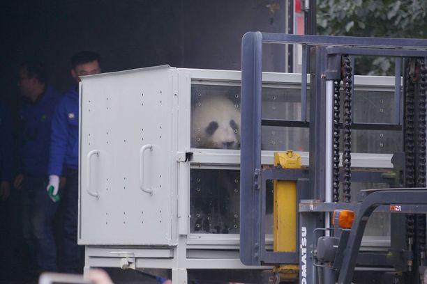 Pandat saapuivat Suomeen 18. tammikuuta.