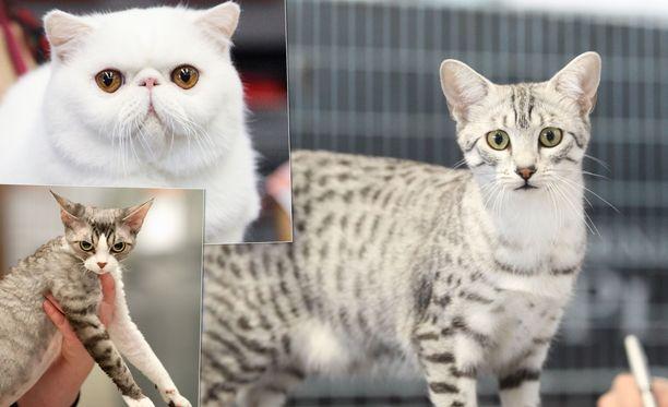Kissojen maailmannäyttelyllä halutaan edistää kissojen arvostusta, parempaa kohtelua ja vaikuttaa kissaharrastuksen leviämiseen Suomessa.