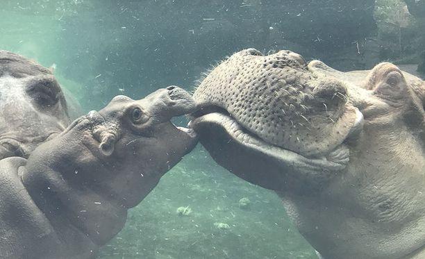 Fiona vanhempiensa kanssa uima-altaassa.