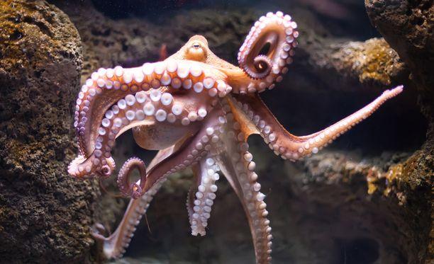Mustekalat ovat normaalisti yksinään viihtyviä erakkoja.