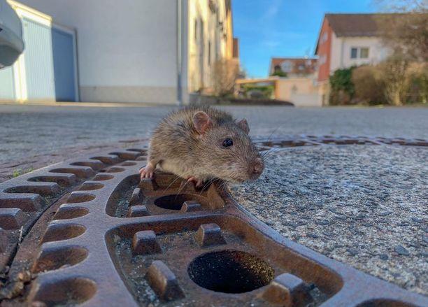 Naapurit hälyttivät rotalle apua.