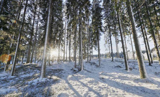 Lumi on hyvä kylmänsuoja. Jos tammikuun kovat pakkaset toistuvat vuosien 2014 ja 2016 tapaan, eteläisen Suomen luonto on kovilla, koska lumipeite puuttuu.