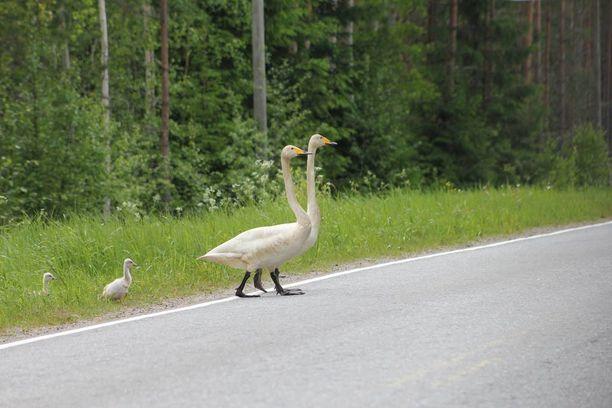 Perhe käveli tien yli peräkanaa.