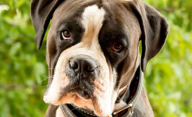 Poliisin tiedossa ei ole, että lihanpalat olisivat aiheuttaneet vahinkoa koirille tai ihmisille.